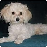 Adopt A Pet :: Timothy - Mooy, AL