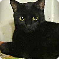 Adopt A Pet :: Moon - Seminole, FL
