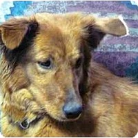 Adopt A Pet :: Annie - YERINGTON, NV
