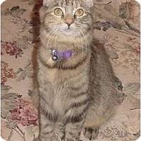Adopt A Pet :: Penny - Franklin, NC