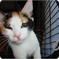 Adopt A Pet :: Maxine - Lake Charles, LA