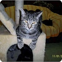 Adopt A Pet :: Cassanova - Pendleton, OR