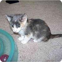 Adopt A Pet :: Megan - Alexandria, VA