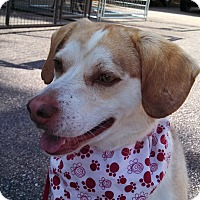 Adopt A Pet :: Sam - Warrenton, NC