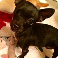 Adopt A Pet :: Bentley - Edmond, OK