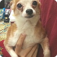 Adopt A Pet :: Shrimp (Peanut) - geneva, FL