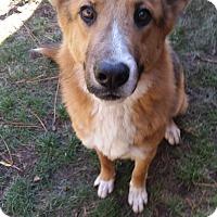 Adopt A Pet :: Zeus - Ashland, OR