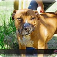 Adopt A Pet :: BARON - Chatham, VA