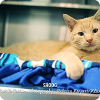 Adopt A Pet :: Shoog - Appleton, WI