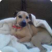 Adopt A Pet :: Charlie - Lebanon, CT