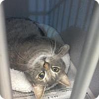 Adopt A Pet :: Penelope - Kinston, NC