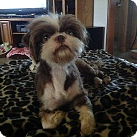 Adopt A Pet :: Violet - LEXINGTON, KY