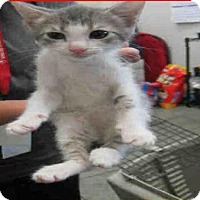 Adopt A Pet :: A384992 - San Antonio, TX