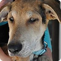 Adopt A Pet :: Josey's Jessa - Silver Spring, MD