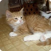 Adopt A Pet :: NEVIN - Medford, WI