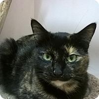 Adopt A Pet :: Racine - Seattle, WA