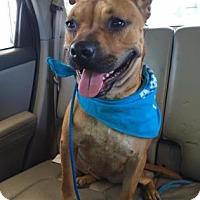 Adopt A Pet :: Nala - Wichita, KS