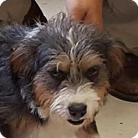 Adopt A Pet :: Davey - Harrisburg, PA