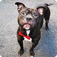 Adopt A Pet :: KING - Kimberton, PA