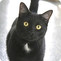 Adopt A Pet :: Bentley - Long Beach, CA