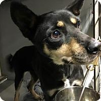 Adopt A Pet :: Nevada - Kansas City, MO