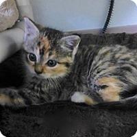 Adopt A Pet :: Bounce - Waxhaw, NC