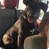 Adopt A Pet :: Donner - Savannah, GA