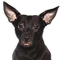 Adopt A Pet :: Kodi - Oakland Park, FL
