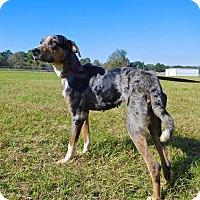 Adopt A Pet :: Tootsie - St. Francisville, LA