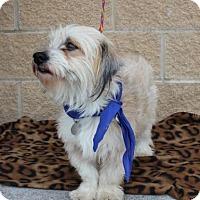 Adopt A Pet :: Kitty - Santa Fe, TX