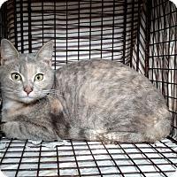 Adopt A Pet :: Sookie - Wakinsville, GA