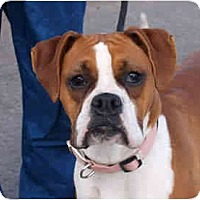 Adopt A Pet :: Runts - Reno, NV