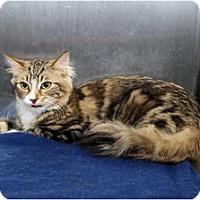 Adopt A Pet :: Zoey - Farmingdale, NY