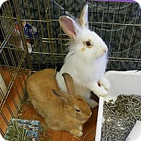 Adopt A Pet :: Tara & Ashley - North Gower, ON