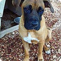 Adopt A Pet :: Riley - Huntsville, TN
