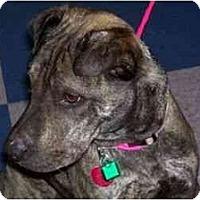 Adopt A Pet :: Fuzzy Ears - Lodi, CA