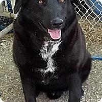 Adopt A Pet :: Chase - Savannah, MO
