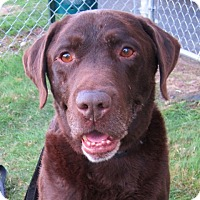 Adopt A Pet :: Tanner - Gig Harbor, WA