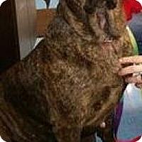 Adopt A Pet :: Hooch - LaGrange, OH