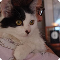 Adopt A Pet :: Liza Jane - Knoxville, TN