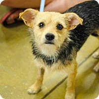 Adopt A Pet :: Jazzy - Gainesville, FL