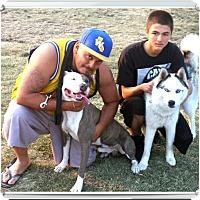 Adopt A Pet :: Maximus - Sacramento, CA