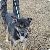 Adopt A Pet :: Cruizer - Southaven, MS