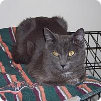 Adopt A Pet :: Ribby - Morganton, NC