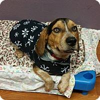 Adopt A Pet :: Otto - Lisbon, OH