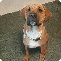 Adopt A Pet :: Gus - Homer, NY