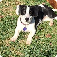Adopt A Pet :: Violet - Fresno, CA