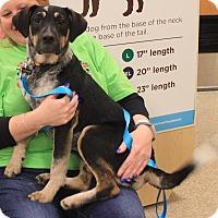 Adopt A Pet :: Kirby - Joliet, IL