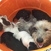 Adopt A Pet :: April - Homestead, FL