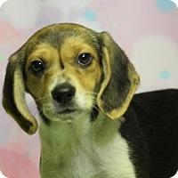 Adopt A Pet :: Peaches (Has application) - Washington, DC